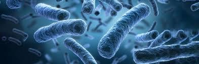 Detoxerum - oczyszczenie organizmu - efekty - działanie - jak stosować